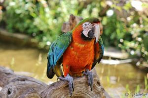 Parrot by Wudnkinf