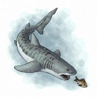 How to draw fish and sharks by LadyAway