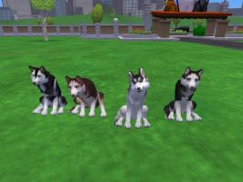 Siberian Huskies by PaintedTreasure