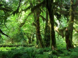 Hoh Rainforest's Hall of Mosses 2 by Icewall42