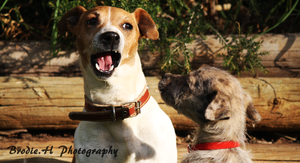 Insolent pup by Photogriff