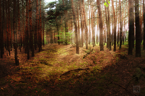 Magical Spring Forest 3 by FilipR8