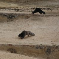 Bird Chases Squirrel by Nolamom3507