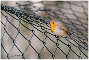 Little Bird by PhotographyChris