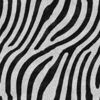 Zebra Stripes. by lylejk