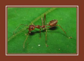 Ant Photo 3 - Set 2 by blookz