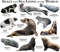 Seals and Sea Lions of the World by rogerdhall