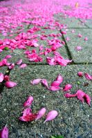 Nature's confetti by Sijah