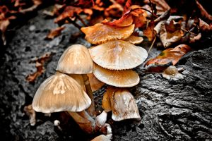 HDR Mushrooms 2009 by photoshoptalent