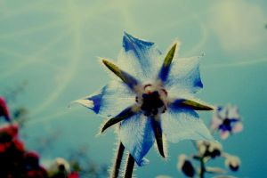 Fairy tale about blue flower 2 by CocoaDesert