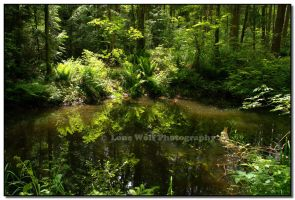 Jurassic Pond by LoneWolfPhotography