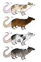 Ratte adopts - closed - by PointAdoptsforyou