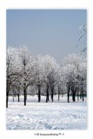 Snowy Trees 2 by Club-Romania
