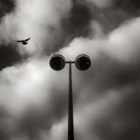 Lamp Variation III: Lamp and Pigeon by vamosver