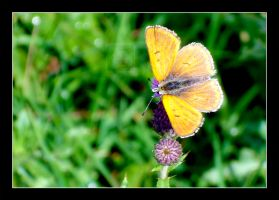 Butterfly? by wusk