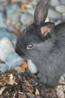 Bunneh close up by EvanHodsonGallery