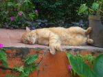 Relaxing... by cocki1