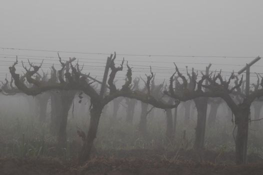 fog 1 by STONEHANDS44