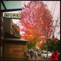 Red Boulevard - Maple ~ Am I in S. Korea !? by A-WI