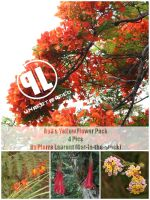 Warm Tones Flowers-Unrestrictd by Cat-in-the-Stock
