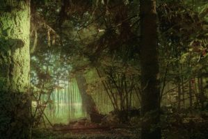 forest 17 by Amalus