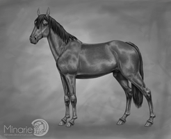YouTube: Horse Greyscale Speedpaint by Minarie