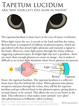 Science Fact Friday: Tapetum Lucidum by Alithographica