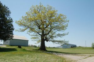 tree 5866 by stocklove