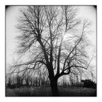 2014-328 My friends, the trees - scan0103 by pearwood