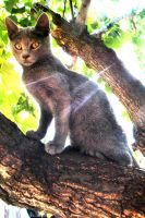 Cat on a green tree by YelloPecora