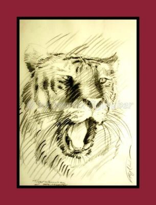 study of a tiger by figlhuber