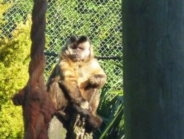 monkey at the zoo by shadowstorm101