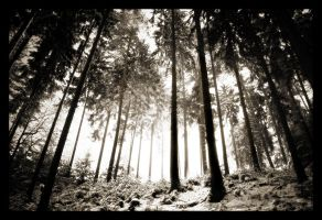 Magic Forest 2 by hquer