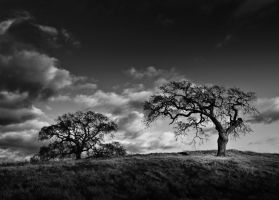 The Hanging Tree by AugustStudios