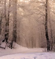 Premade background: Winter forest by amygdaladesign