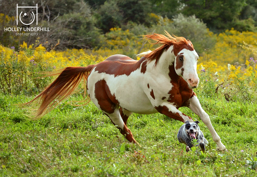 Horses are sore losers when playing tag. by ThunderhillPaints