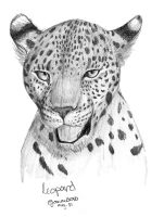 Leopard Face by Joava