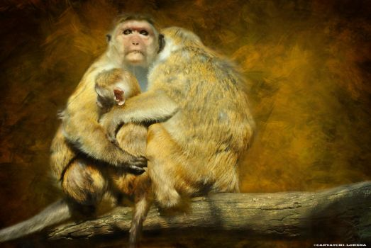 monkey family by rockmylife