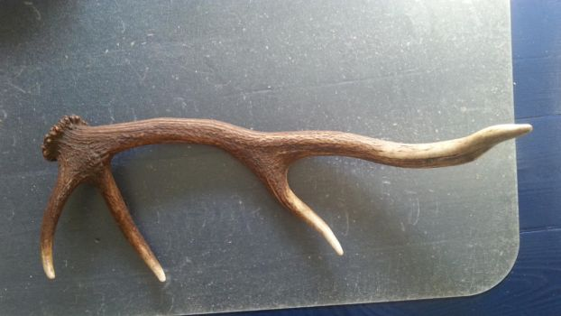 Antler stock by AntlerStock