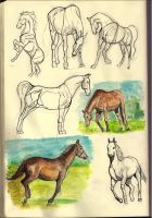 Horse sketches by KennySwanston