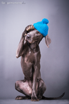 Studio Dog by Spiegelmomente