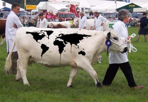 world cow by CharryCola