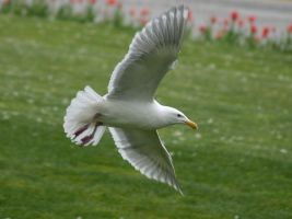 Seagull 3 by TheInfernalDemon