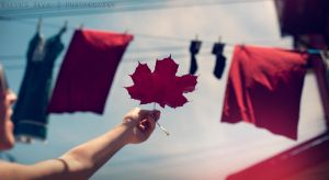 Happy Canada Day by shayne-gray