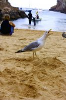 angry seagull by forGaia