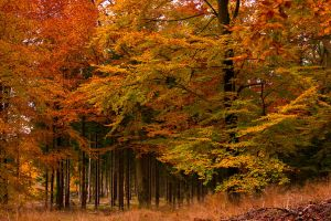 Autumn forest by AWhisperOfLove