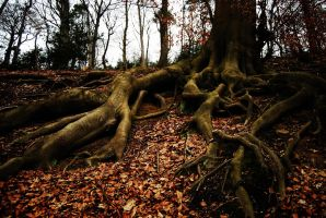 roots by DeluxeArts