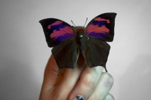 pink and purple butterfly by TheButterflyBabe