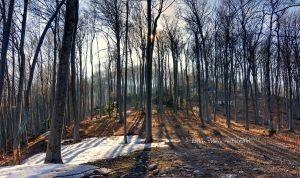 Mountain forest in early spring by Swen11