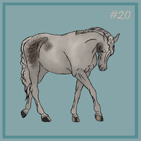 20 Grey by EquineRibbon